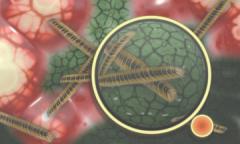 研究表明�Θ�ICU患者���慎使用益生菌[�D]